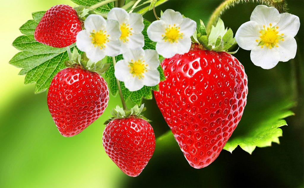 Strawberry: /ˈstrɔ:bəri/: dâu tây