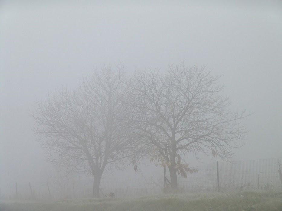 Fog / fɔːɡ /: sương mù