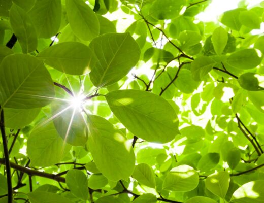 Bài hội thoại tiếng Anh về Thời tiết và cách học hiệu quả
