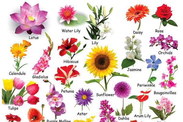 Danh sách tên các loài hoa bằng tiếng Anh hay